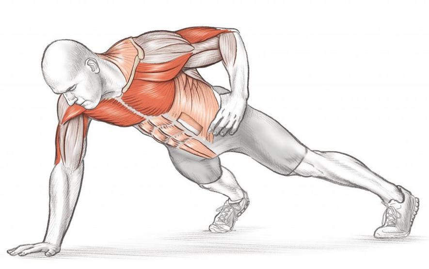 Какие мышцы работают при отжимании на одной руке
