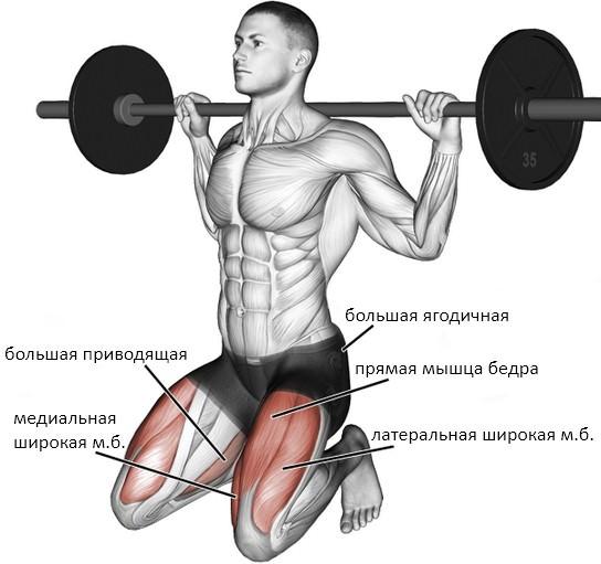 Приседания на коленях: работающие мышцы