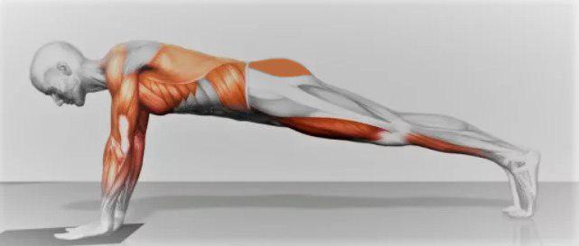 Мышцы, работающие в упражнении планка