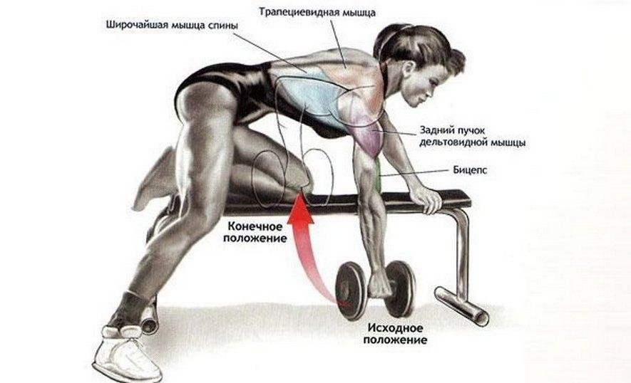 Мышцы работающие в тяге гантели в наклоне одной рукой