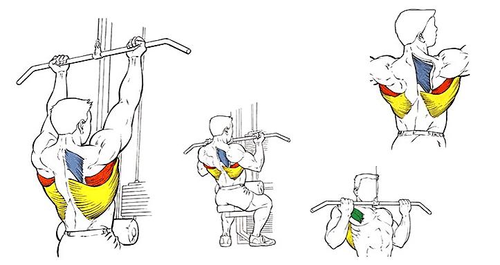 Тяга верхнего блока обратным хватом, работающие мышцы