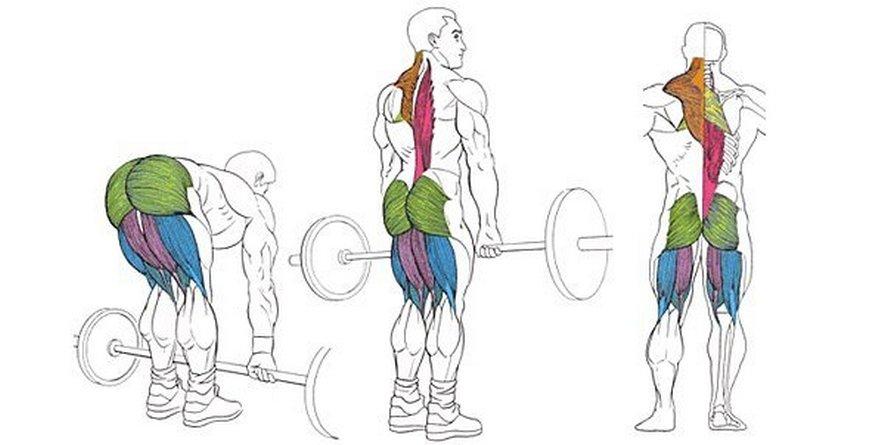 Мышцы работающие в румынской тяге со штангой
