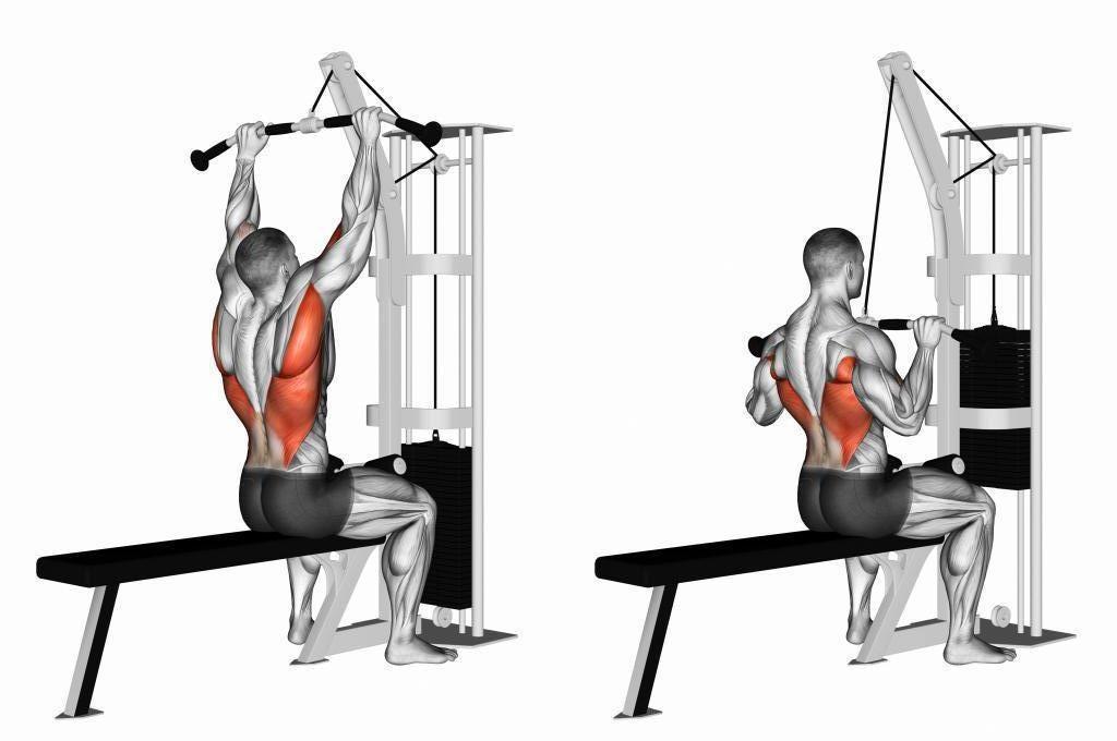 Мышцы работающие в тяге верхнего блока к груди