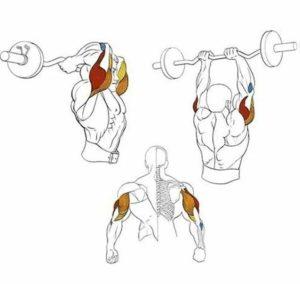 Какие мышцы развивает французский жим стоя