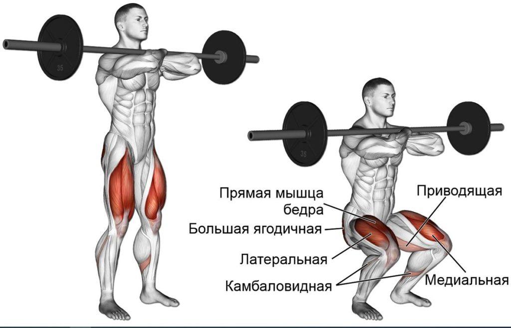 Какие мышцы работают при фронтальном приседе