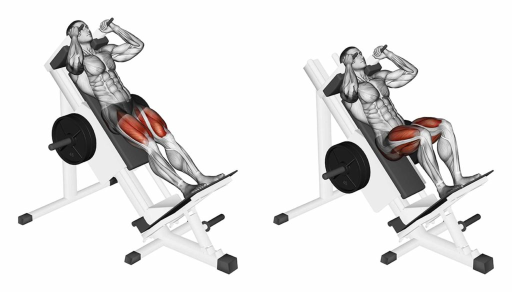 Какие мышцы участвуют в гакк-приседаниях