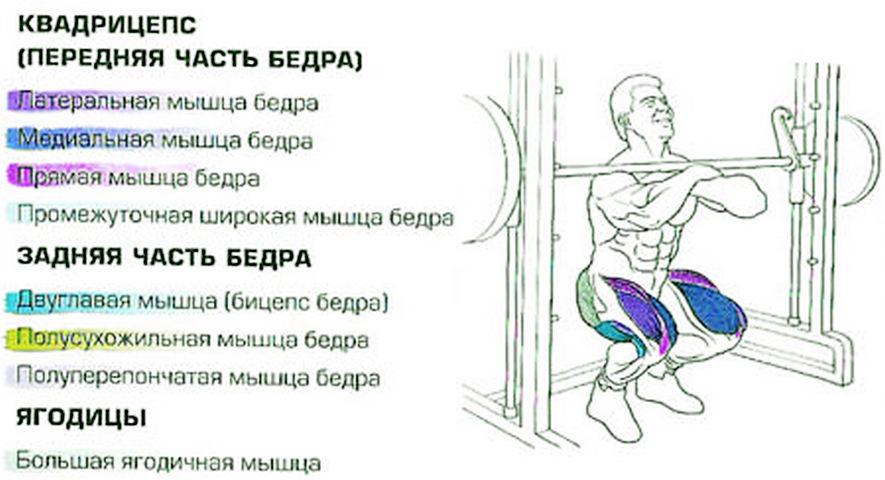 Мышцы, работающие в приседаниях Зерхера