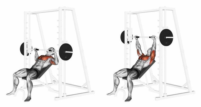 Мышцы, работающие в наклонном жиме Смита