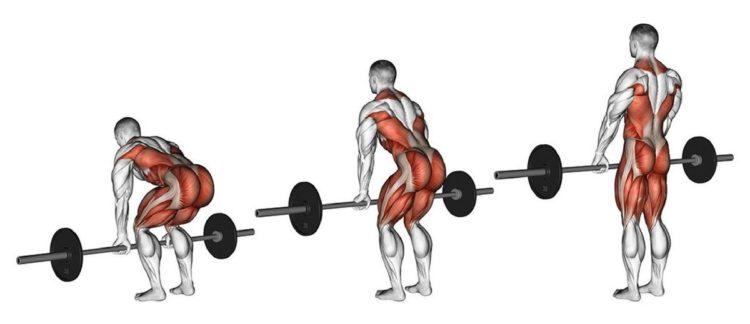 Какие мышцы задействованы в становой тяге со штангой