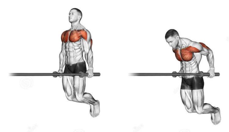 Какие мышцы задействованы в отжиманиях на брусьях