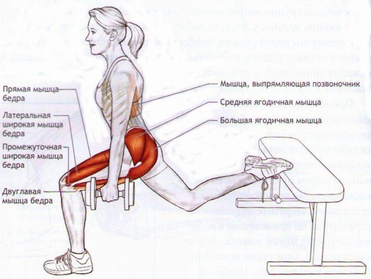 Работающие мышцы в болгарских выпадах