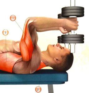 Какие мышцы задейстованы во французском жиме с гантелями