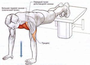 Какие мышцы задействованы в наклонных отжиманиях