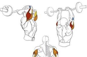 Какие мышцы работают во французском жиме сидя со штангой