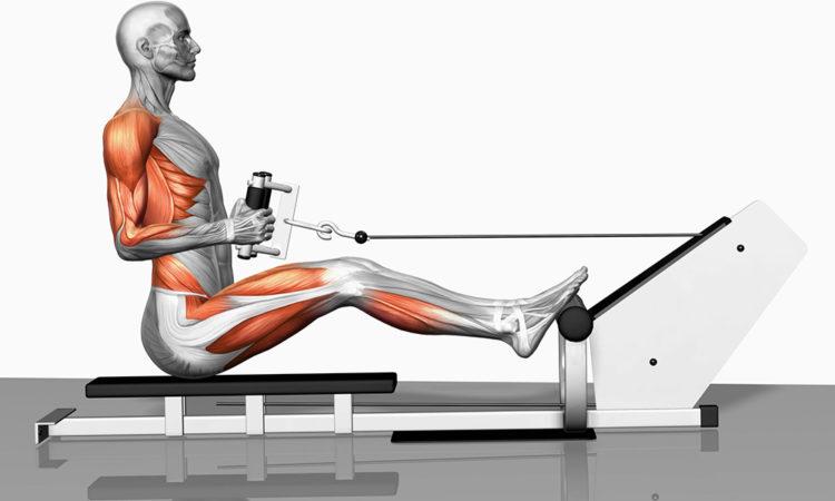 Какие мышцы задействованы в горизонтальной тяге