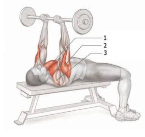 Какие мышцы задействованы в жиме штанги лежа узким хватом