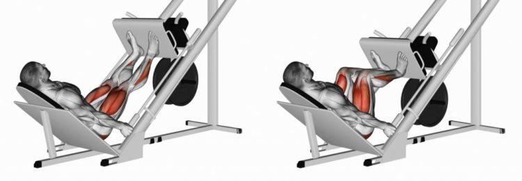 Мышцы задействованные в жиме ногами