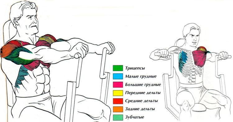 Какие мышцы задействованы в жиме в тренажере хаммера