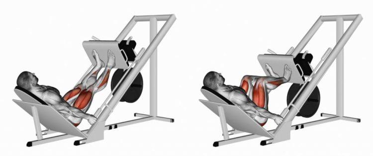 Какие мышцы задейстованы в жиме ногами в тренажере