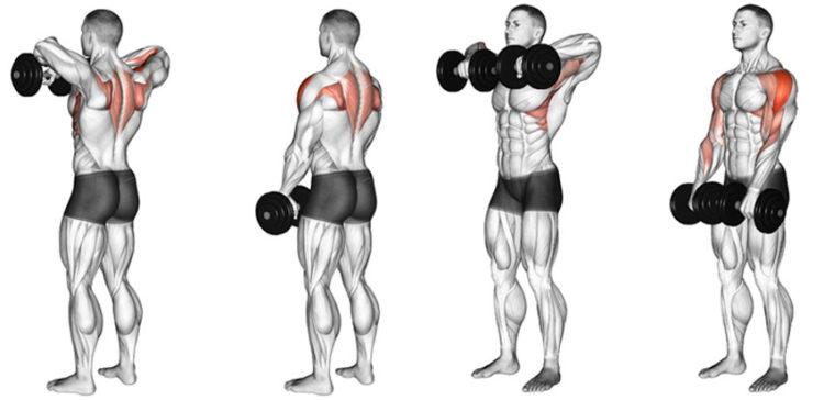 Какие мышцы задействованы в тяге гантелей к подбородку