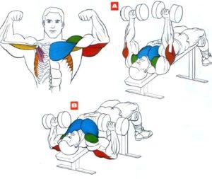 Какие мышцы задейстованы в жиме гантелей головой вниз