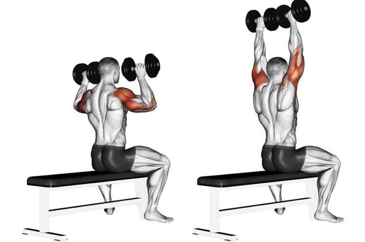 Какие мышцы задейстованы в жиме гантелей сидя на плечи