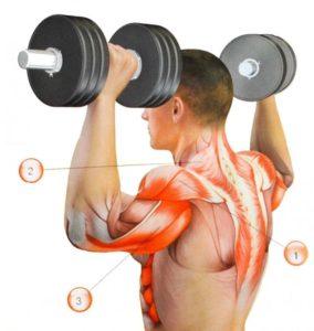 Мышцы задействованные в жиме стоя с гантелями