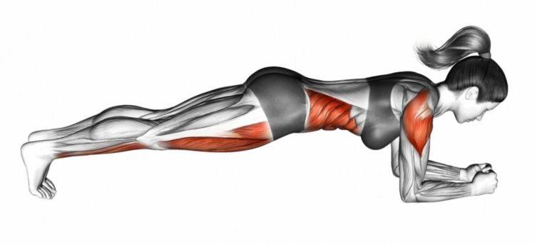 Мышцы задействованные в планке на локтях