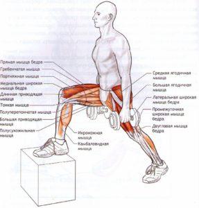 Какие мышцы работают в выпадах на степе