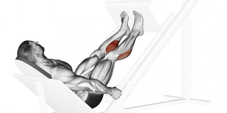 Мышцы задействованные в жиме носками в тренажере на икроножные
