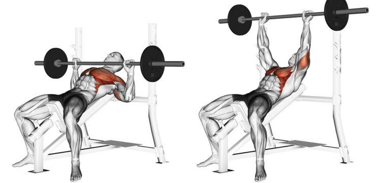 Мышцы задействованные в жиме штанги на наклонной скамье