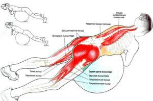Какие мышцы задействованы в гиперэкстензии на фитболе