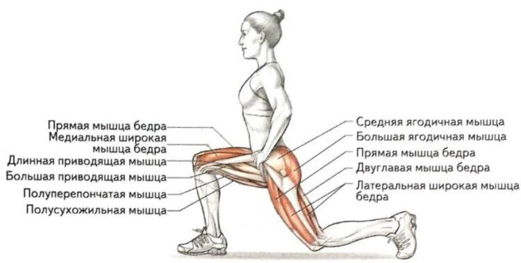 Мышцы задействованные в выпадах вперед