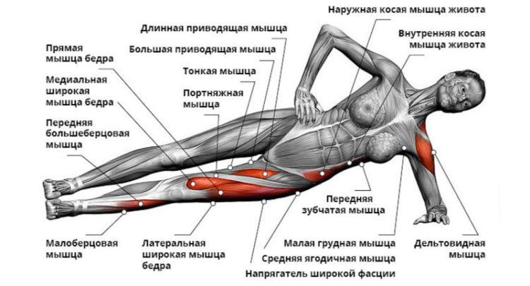 Мышцы в боковой планке