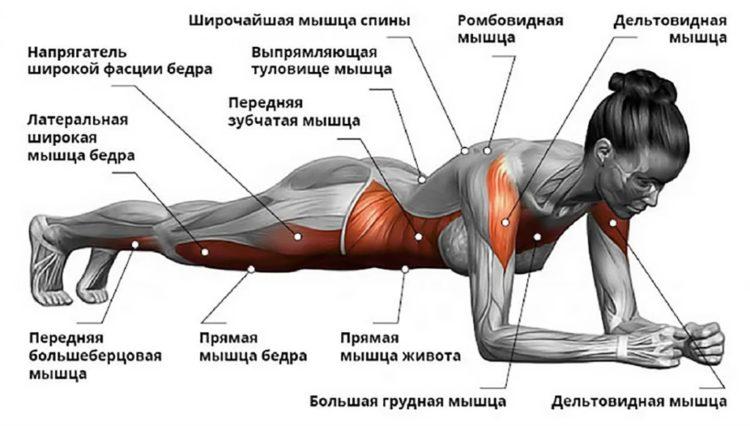 Какие мышцы задействует планка?