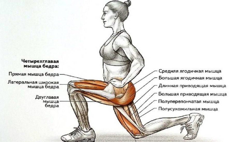 Мышцы задействованные в ходьбе с выпадами