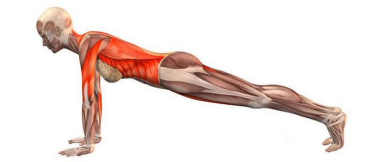 Мышцы, работающие в планке на прямых руках