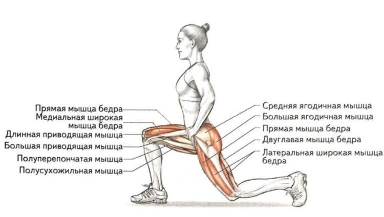 Какие мышцы, задействованы в выпадах